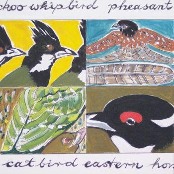 Whipbird, Catbird, Pheasant Cuckoo & Eastern Honeyeater